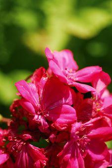 Free Flower 29 Stock Photos - 1707533