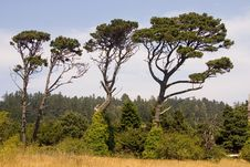 Trees In The Field Stock Photography