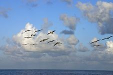 Free Pelicans At Sunrise Royalty Free Stock Photos - 1708788