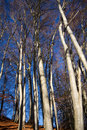 Free Beech Forest At Lake Chiemsee Stock Photos - 17007493
