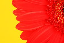 Free Petals Of A Red Flower Stock Image - 17002561