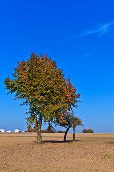 Free Beautiful Tree In Ploughed Acre Royalty Free Stock Photos - 17002848