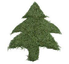 Free Green Tree Of The Needles Stock Image - 17004091