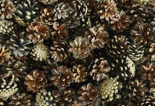 Free Pine Cones Royalty Free Stock Photos - 17004498