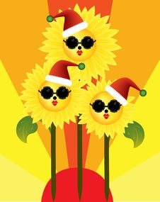 Free Merry Christmas From Sunflowers In The Sun Stock Image - 17005241