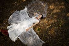 Free Trash The Dress In Autumn Forest Royalty Free Stock Photos - 17005338