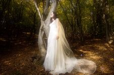 Free Trash The Dress In Autumn Forest Royalty Free Stock Image - 17005356