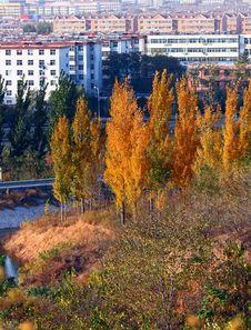 Free Autumn Trees Royalty Free Stock Photography - 17005877