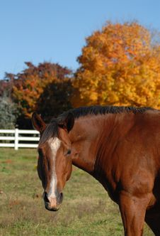 Free Horse In Autumn Field Royalty Free Stock Photos - 17006278