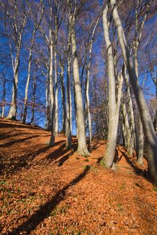 Free Beech Forest At Lake Chiemsee Royalty Free Stock Photography - 17007177