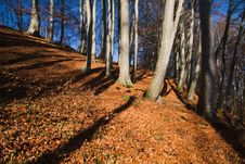 Free Beech Forest At Lake Chiemsee Royalty Free Stock Photo - 17007235
