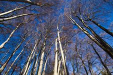 Free Beech Forest At Lake Chiemsee Royalty Free Stock Photography - 17007587