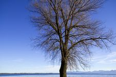 Free Leafless Tree In Autumn Royalty Free Stock Photos - 17007608