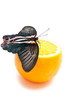 Free Butterfly And Orange Stock Image - 17007821