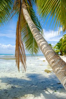 Free Palm Hanging Over Beach Royalty Free Stock Photo - 17009085