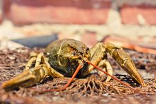 The Crawfish In Fishing Network Royalty Free Stock Photos