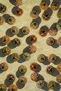 Free Jewel Box Circles Royalty Free Stock Images - 17010689