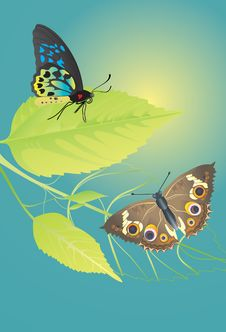 Free Two Beautiful Butterflies Resting On The Leaves. Royalty Free Stock Images - 17010779