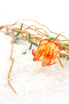 Free Carnation On The Snow Royalty Free Stock Images - 17011019