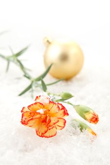 Free Carnation On The Snow Stock Image - 17011031