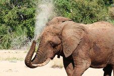 Free Elephant Washing Royalty Free Stock Photography - 17015437