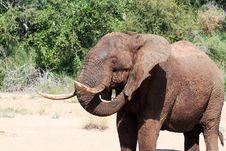 Free Elephant Scratching Stock Photos - 17015443
