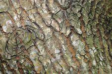 Free Tree Bark Royalty Free Stock Photography - 17016027