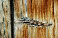Closeup View Of A Wooden Texture With Knot Royalty Free Stock Photos