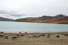 Free Scenery In Tibet Royalty Free Stock Images - 17017899