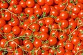 Free Cluster Tomato Cherry Background Stock Photography - 17027892