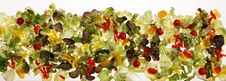 Free Salad Leaves Royalty Free Stock Image - 17020046