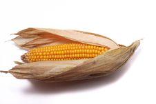 Free An Ear Of Ripe Corn Stock Image - 17020911