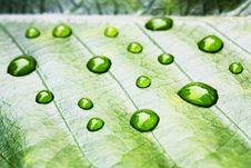 Free Dew Drop Stock Images - 17021244