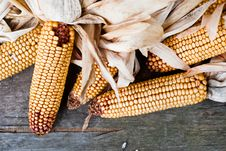 Free Corn V1 Royalty Free Stock Photos - 17024588