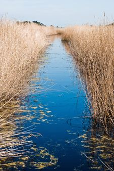 Free Small Flow Through Reed Stock Photography - 17024632