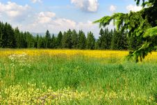 Free Meadow In Trentino Royalty Free Stock Photo - 17025605