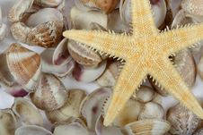 Cockleshells And A Starfish Stock Images
