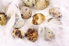 Free Quail S Eggs Royalty Free Stock Images - 17025649