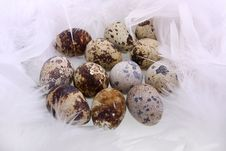 Free Quail S Eggs Stock Photography - 17025992