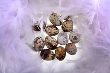 Free Quail S Eggs Royalty Free Stock Photos - 17026018