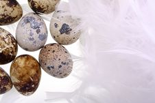 Free Quail S Eggs Royalty Free Stock Photos - 17026048