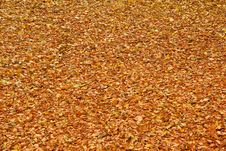 Free Fallen Leaves On The Ground Royalty Free Stock Image - 17026426