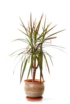 Free Small Decorative Tree Stock Image - 17027021