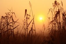 Golden Sunrise Stock Photo