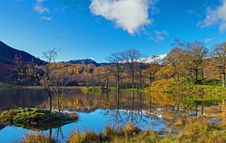 Free Rydal Trees Stock Images - 17027314