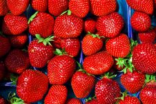Free Strawberry Background In The Box Royalty Free Stock Photos - 17028158