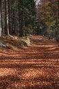 Free Autumn Road Stock Photos - 17034893