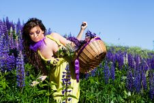 Free Woman In Plant Of Violet Wild Lupine Stock Photo - 17030230