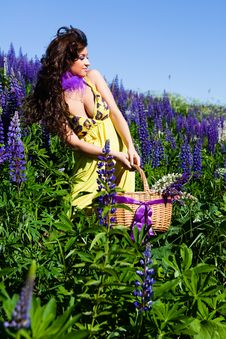 Woman In Plant Of Violet Wild Lupine Royalty Free Stock Photos