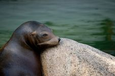 Free Seal In Zoo Stock Images - 17033104